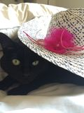 Black Cat Is Not Amused. Black, green eyes cat stares out from under white straw girls hat with pink bow royalty free stock image