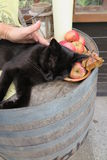 Black cat on old barrel Stock Photos