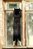 Black cat on a old window Stock Photography