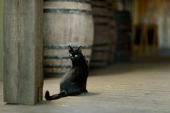 Black cat in an old winery Stock Photos