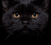 Black Cat On Black Royalty Free Stock Images