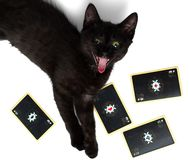 Black cat with open mouth lying on a square of four aces. Isolated on a white background.  stock photo