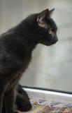 Black cat with orange eyes Stock Photo