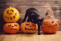 Black cat with orange halloween pumpkin. On wooden background stock photography