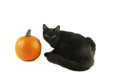 Black Cat and a orange Pumpkin. On white background Stock Image