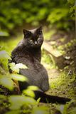 Tom male cat outdoor summer photo stock photos