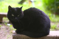Tom male cat outdoor summer photo royalty free stock photos