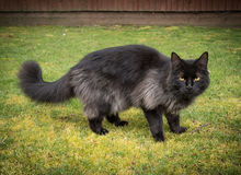 Black Cat Outdoors Stock Photo