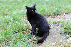 Black cat outside Royalty Free Stock Photos
