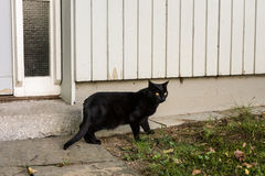 Black cat outside a wooden house stock photo