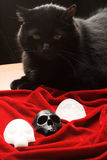 Black cat over skulls Royalty Free Stock Images