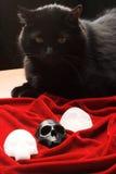 Black cat over skulls. Black cat sitting over three skulls on red velvet Royalty Free Stock Images