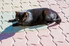 Black cat on the pavement in the bright sun royalty free stock photos