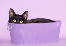 Black cat peeking out of a purple tub Stock Photo