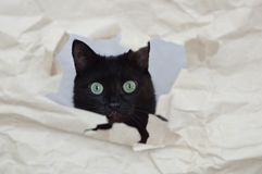 A black cat peeks through a hole royalty free stock image