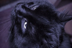 Black cat photo Royalty Free Stock Images