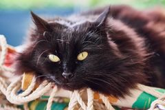 Black cat on a pillow royalty free stock images