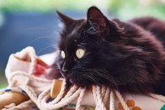 Black cat on a pillow stock photo
