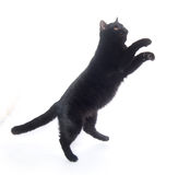 Black cat playing Stock Photo