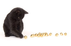 Black cat playing with christmas ornaments. A black cat plays with small, gold christmas ornaments stock photography