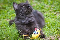 Black Cat Playing on the grass Royalty Free Stock Photography