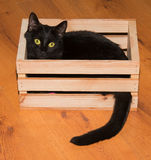 Black cat playing and hiding in a wooden crate Stock Photos