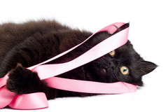 Black cat playing with pink ribbon Stock Image