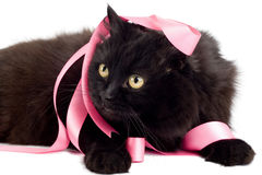 Black cat playing with pink ribbon. Isolated Stock Photo