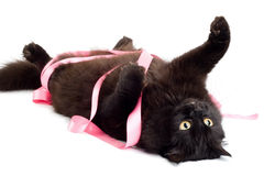 Black cat playing with pink ribbon isolated Royalty Free Stock Image
