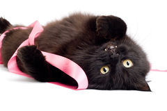Black cat playing with pink ribbon isolated Stock Photo