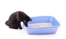 Black cat playing with sand in her litter box Stock Images