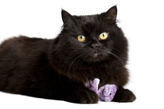 Black cat playing with toy. Isolated Stock Image