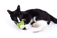 Black cat playing with a toy Royalty Free Stock Images