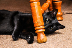 Black Cat Playing Stock Photos