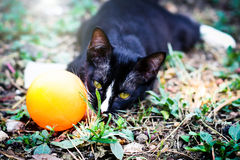 A black cat Stock Photography