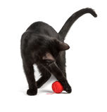 Black cat plays Royalty Free Stock Photo
