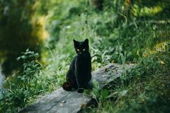Black cat at the pond Royalty Free Stock Photography