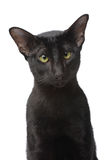 Black cat portrait Royalty Free Stock Images