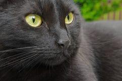 Black cat portrait. Close up of black cat's face Stock Photo