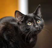 Black cat portrait Stock Photo