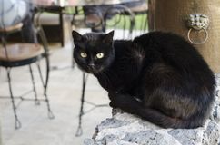 Black cat portrait. Curious black cat sitting on a enclosing wall royalty free stock photos