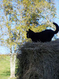Black cat outside Stock Images