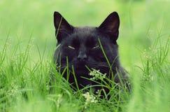 Black cat portrait Stock Image
