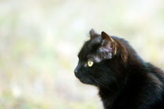Black cat portrait Stock Photo