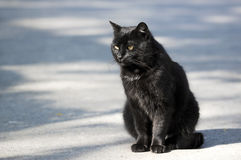 Black cat - RAW format Royalty Free Stock Image