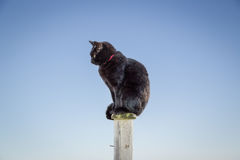 Black cat on a post against a blue sky Royalty Free Stock Photos