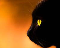Black Cat Profile On Defocused Background Stock Images