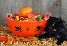 Black cat protecting halloween candy. Closeup black cat protecting bowl of halloween candy royalty free stock image