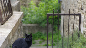Black cat in Provence. Black cat sitting at top of stairs beside an iron railing with stone wall on the left and green vegetation in the background, Provence stock photos