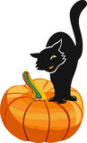 Black cat on pumking Stock Images